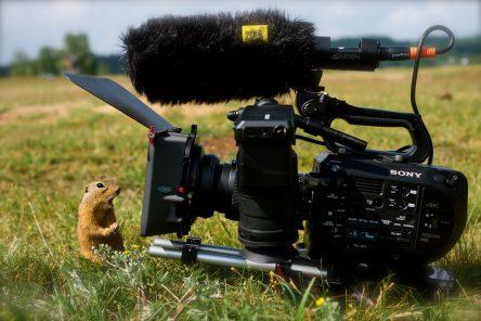 Akce Živé kino předznamená festival dokumentů v Jihlavě